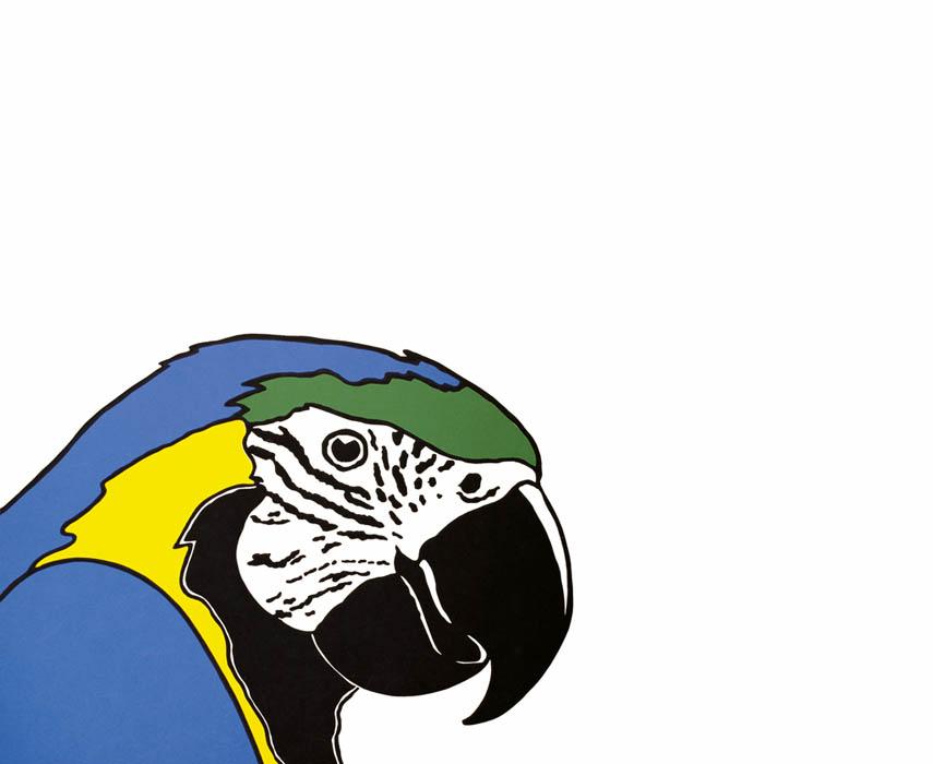 BRAZILIAN PAPAGUEI